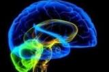 Estudio: Google cambia cómo funcionan el cerebro y la memoria