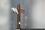EEUU Zona Cero: grupo ateo que pide retirar la cruz formada por dos vigas de acero rescatadas tras el derrumbe de las Torres Gemelas